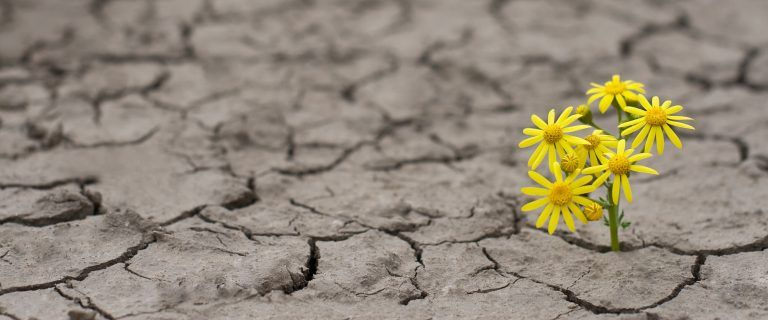 resiliencia economia ciruclar